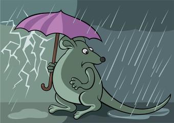 Frightened rat with unbrella under the rain