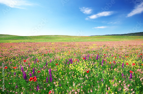 Spring flower meadow