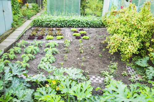 Vegetable Garden Patch