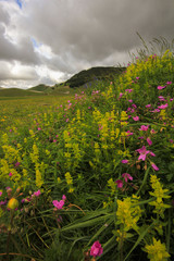 Beautiful high mountain flowers