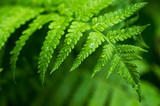 Fern leaf close-up