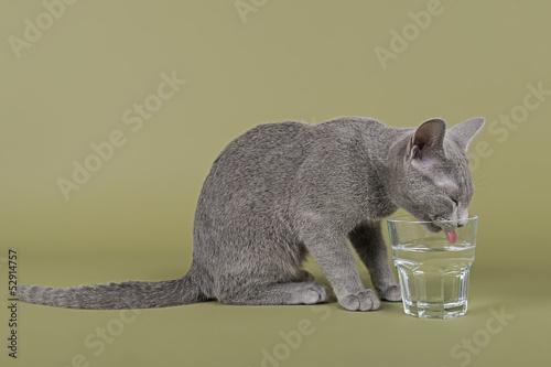 Katzen-Russisch-Blau-4279