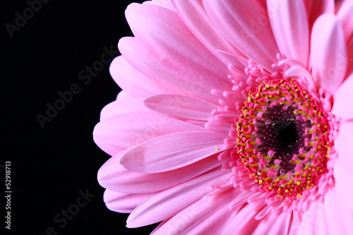 canvas print picture blume, aster