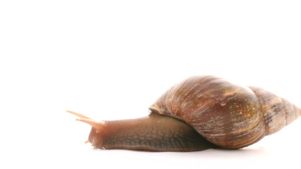 Little snail on a white background. Close-up