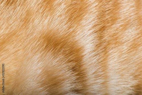 Orange skin of cat