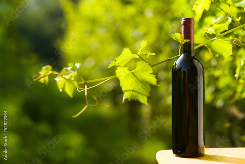 Red wine bottle in vineyard