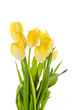 Beautiful bouquet of yellow tulips on a white background.