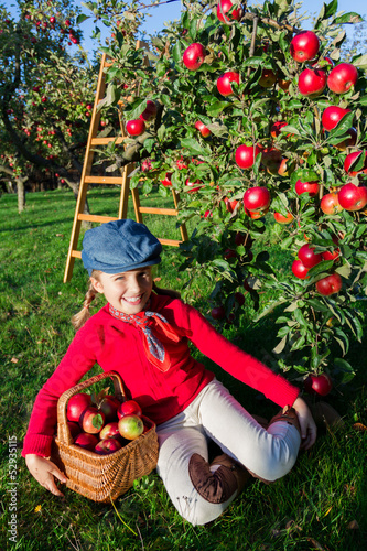 Young girl picking organic Apples into the Basket.Orchard.