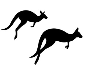 two kangaroo