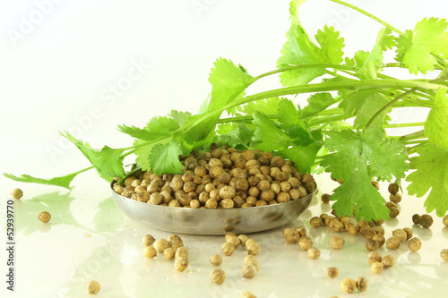 coriander and coriander seeds