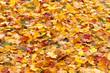 feuilles mortes d'automne
