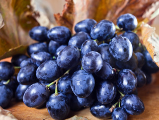 ripe blue grape
