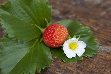 fresa, flor y hoja de la fresa