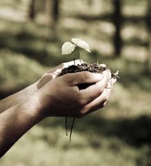 Hand mit Erde und Bäumchen
