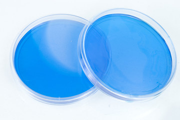 Two Blue Petri Dishes