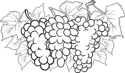 bunches of grapes illustration for coloring