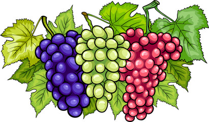 bunches of grapes cartoon illustration