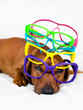 Dog and colorful glasses