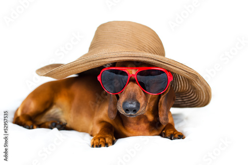 A dog in a fashionable hat