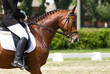 Dressage horse and rider - 52957939