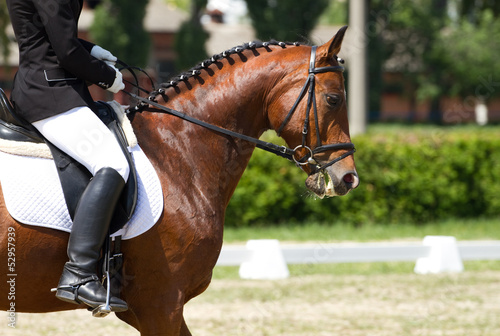 canvas print picture Dressage horse and rider