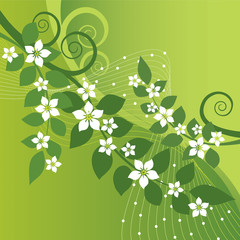 Beautiful jasmine flowers and green swirls on green background