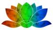 lotus dégradé 4