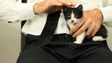 Business man caressing kitten