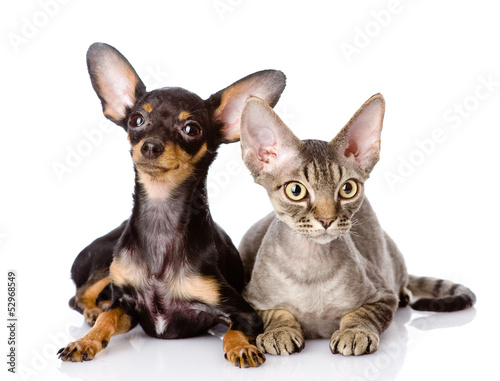 Deurstickers Franse bulldog devon rex cat and toy-terrier puppy together. isolated