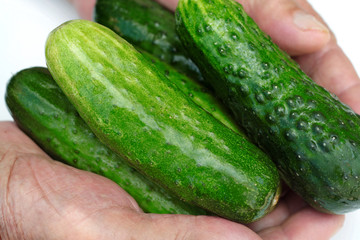 Tasty green cucumbers