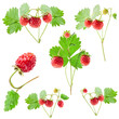 Collection of Wild strawberry isolated on white