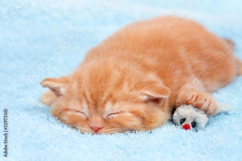 Little cat sleeping on blue blanket with toy mouse