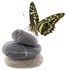 papillon sur galets superposés