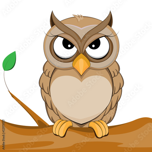 cute owl vector of illustration