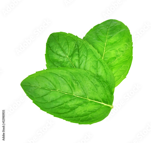 Fresh leaf mint