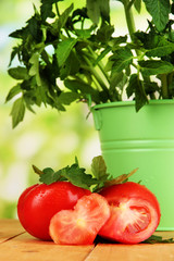 Fresh tomatoes and young plant in bucket