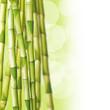 Cannes de bambous, fond vert