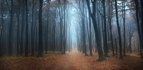 Foggy autumn day into the forest