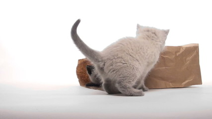 Kitten playing in paper bag