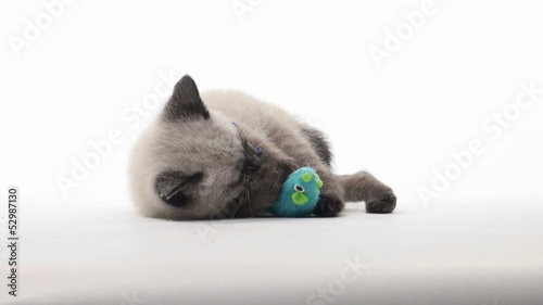 Kitten playing on white background