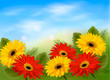 Nature background with colorful beautiful flowers and blue sky.