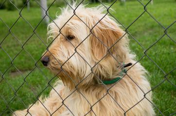 dog in asylum