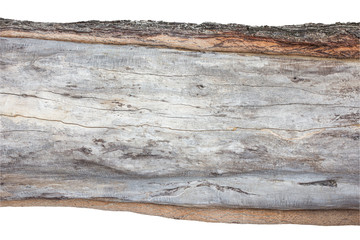 .wood cross section, backgrounds bark and wood texture on white