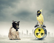 Cat and parrot in gas masks