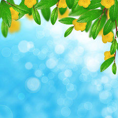 Green leaves and yellow flowers on the sky background