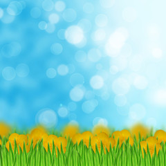 Field of yellow flowers and grass on the sky background