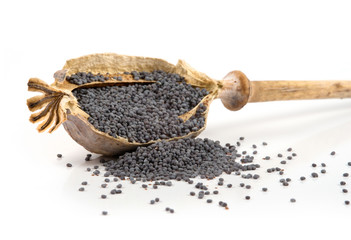 poppy head and seeds