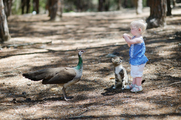 Adorable toddler girl feeding a peacock
