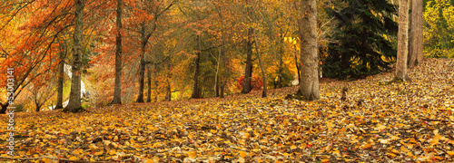 Autumn Panorama 2