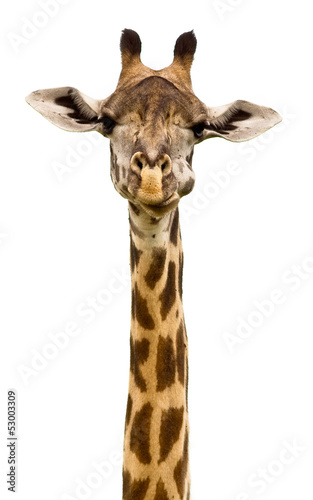 Staande foto Giraffe Giraffe head Isolated